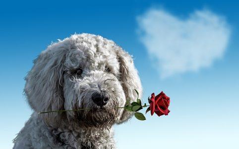 Valentijnsdag, single